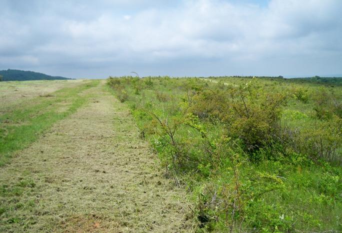 Методи за възстановяване на замърсени земи